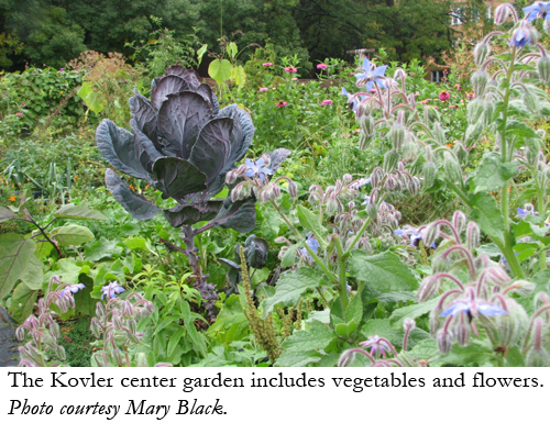 The Kovler center garden includes vegetables and flowers. Photo courtesy Mary Black.
